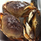 Crabbing Season Delayed