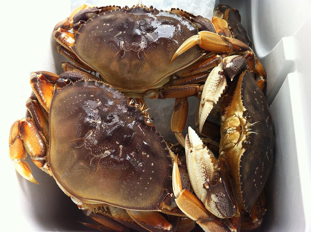 Crabbing Season Delayed